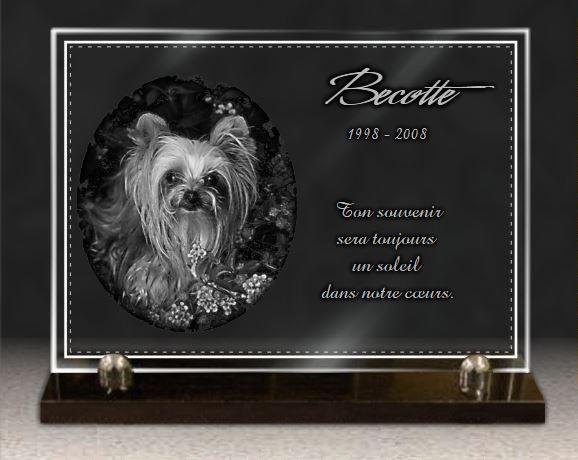 Plaque funéraire verre  Yorkshire Terrier bordure décorative. 25 x 35 cm.