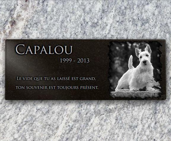 Plaque funéraire granit  fox terrier . 15 x 40 cm.